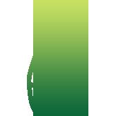 icone-cedre
